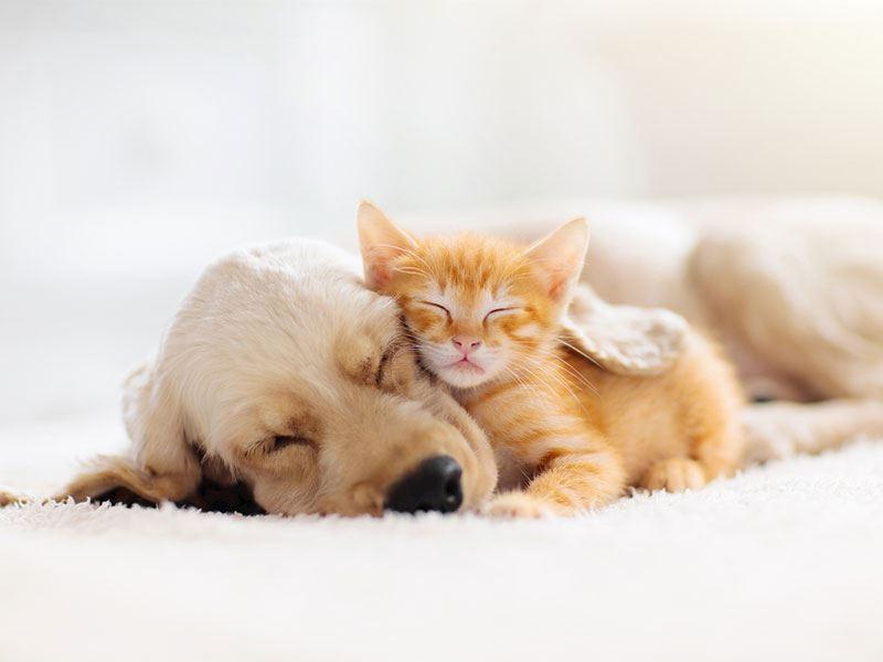 Evcil hayvanları beslemenin püf noktaları