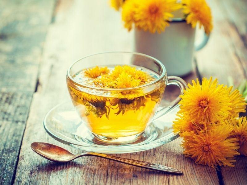 Karahindibanın Faydaları Nelerdir, Karahindiba Çayı Nasıl Yapılır?