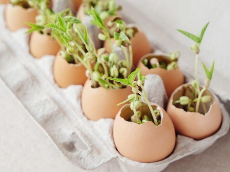 Yumurta Kabuğunun Kullanım Alanları Nelerdir?